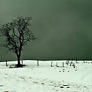 Solitary Tree by Richard Downes