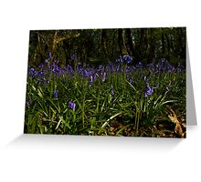 Bluebells in Prehen Woods Greeting Card