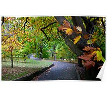 Autumn Leaves - Hobart botanical gardens Poster