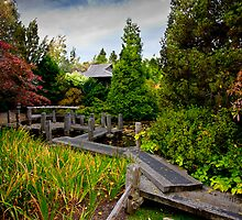 Japanese Garden - Hobart Botanical Gardens by Timothy Hanslow