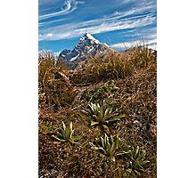 Alpines and Alps  Photographic Print