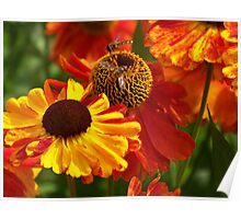 Two insects, Two flowers Poster