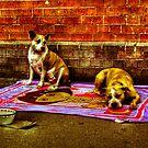 Beggars in Chinatown - HDR by kutayk