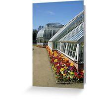 Primroses at Ardgillan Greeting Card