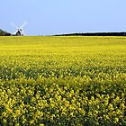 Windmill Among The Yellow Blooms by TallulahMoody