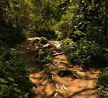 Exposed tree root pathway by moor2sea