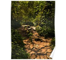 Exposed tree root pathway Poster