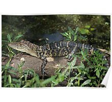 Baby Gator Poster