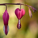 Heart to heart by Mandy Disher