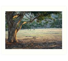 Kangaroos in the Field - Kangaroo Island  Art Print