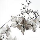 quiet brilliance by Rebecca Tun
