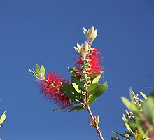 bottle brush by fazza