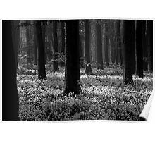 Sinister woodlands Poster