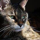 Pensive Nikki by jodi payne