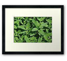 Catnip Framed Print
