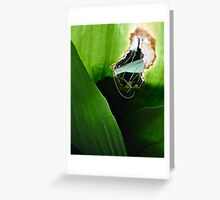 Scarred Greeting Card