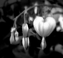 Bleeding Heart ll by Patricia  Butler