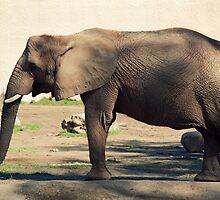 Portrait Of A Elephant by jodi payne
