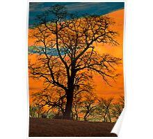 Leafless Tree, Orange Sky Poster