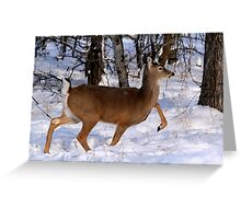 WHITETAIL DOE ON THE MOVE... Greeting Card