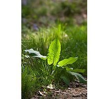 Woodland leaves Photographic Print