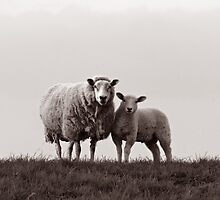 Ewe & Lamb by LisaRoberts