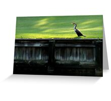 Kiawah Cormorant Greeting Card