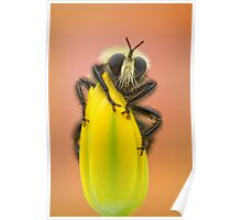 Giant Robber fly Poster