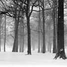 Snowy Day in Pelham Bay Park by Alberto  DeJesus