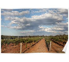 Vineyard at Hunter Valley, NSW, Australia Poster