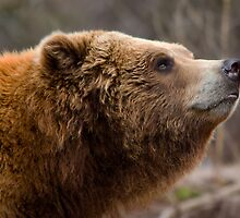 Gentle Ben by Jeff Weymier