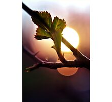 Sunset on New Growth Photographic Print