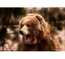 Brown Bear Lurking in the Bush Photographic Print