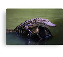 Gator Coming Aboard Canvas Print