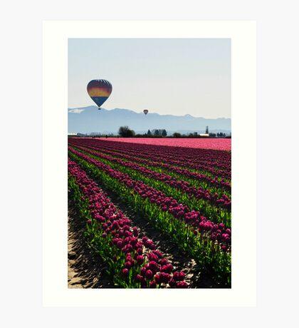 Skagit Valley Tulips Art Print