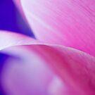 pink & blue by piwaki