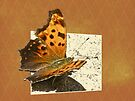 Anglewing Butterfly by MotherNature