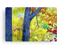 Autumn Leaves in Central Park  Canvas Print