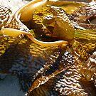 Sunshine on Seaweed by DEB CAMERON