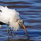Wood Stork by naturalnomad