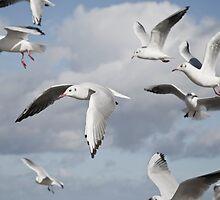 Flying Seagulls by Maria Heyens