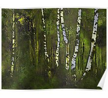 Birches in the spring Poster