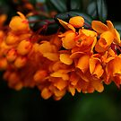 Flowers by Mike Topley