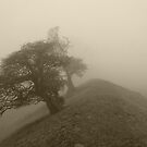 Through The Mist by Mike Topley