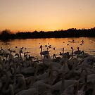 Watermead Park by Mike Topley