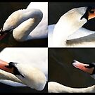 The Swan by Mike Topley