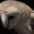 Barn Owl 2 by Mike Topley