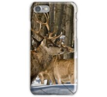 Red Deers In Winter iPhone Case/Skin