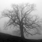 The Fog 4 by Mike Topley