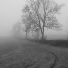 The Fog 8 by Mike Topley